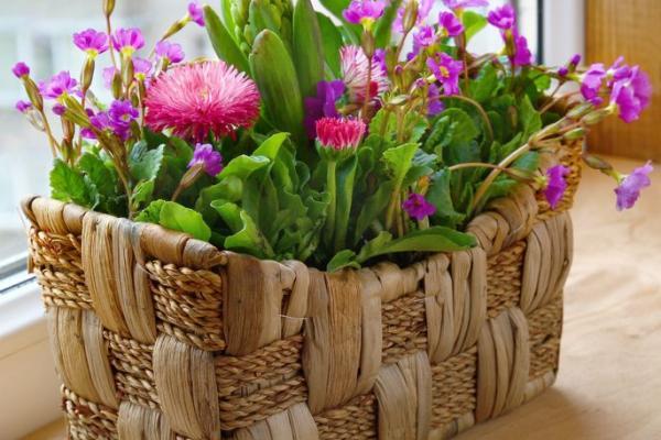 Необходимые условия для зимовки комнатных растений