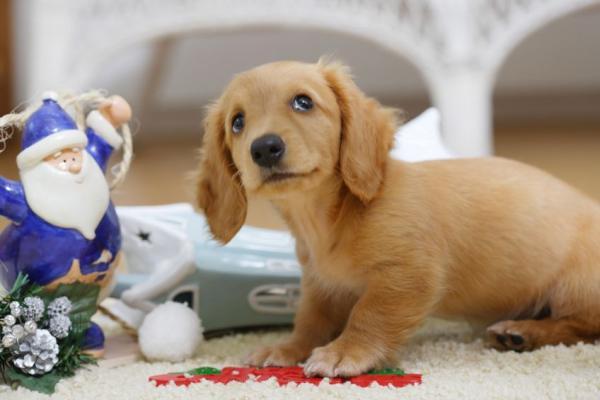Воспитание щенка в квартире