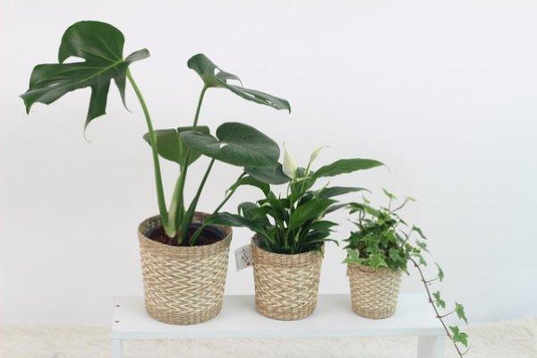 Топ 5+1 растений для дома, лучше всего очищающих воздух в жилище