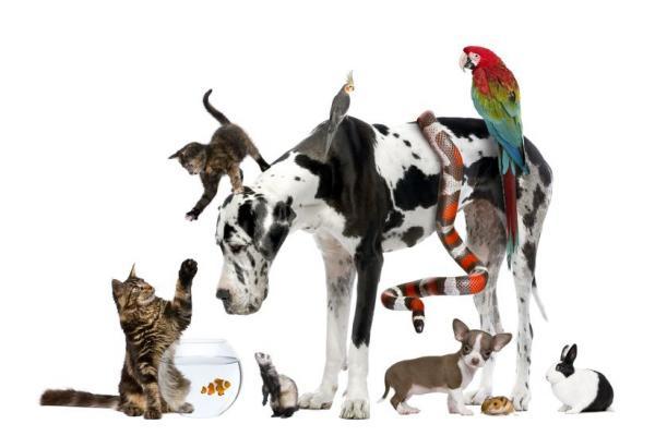 Домашнее животное: как выбрать питомца?