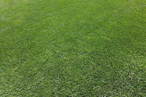 Секреты правильной посадки газона