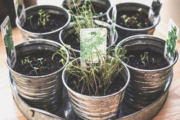 Какие лекарственные травы необходимо вырастить у себя на участке?