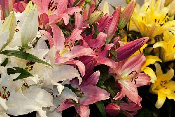 Правила создания цветника из лилий
