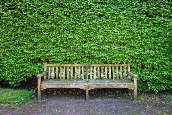 Какими растениями лучше оградить участок?