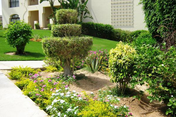 Топиарий — уникальный сад своими руками