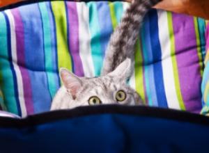 Как правильно выкупать кошку?