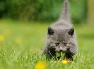 Занимательные советы по выбору котенка