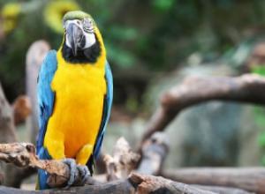Как выбирать попугая?