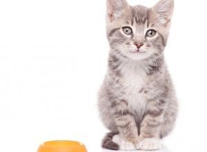 Как правильно кормить кошку сухим кормом