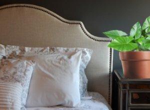 5 домашних растений для улучшения сна