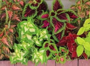 Идеальные растения для кухни: как их выбрать