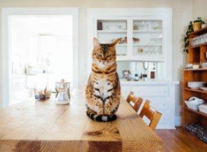 Секреты экономии места на кухне