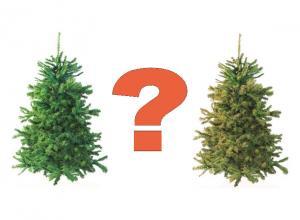 Какая новогодняя елка лучше: настоящая или искусственная?