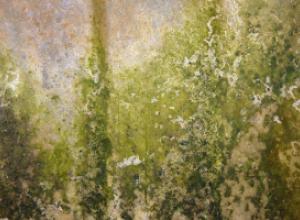Как избавиться от грибковых поражений на стенах