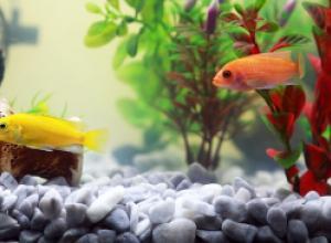 Предметы «с улицы» для украшения аквариумов