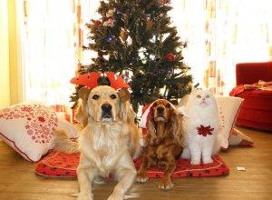 Как обезопасить домашних питомцев в новогодние праздники