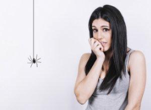 Почему мы боимся пауков