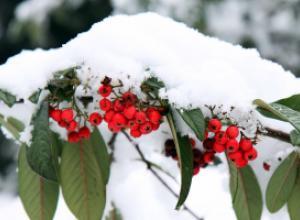 Как помочь молодому саду пережить зиму