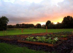 Приподнятые грядки — красивое и удобное решение для сада