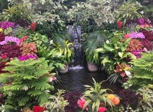 Озеленение водоёмов: выбор растительного ассортимента